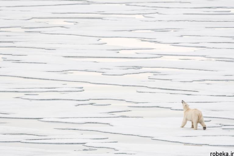 wildlife animal photos 23 29 عکس زیبا و دیدنی نشنال جئوگرافیک از حیات وحش حیوانات