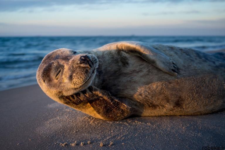 wildlife animal photos 24 29 عکس زیبا و دیدنی نشنال جئوگرافیک از حیات وحش حیوانات