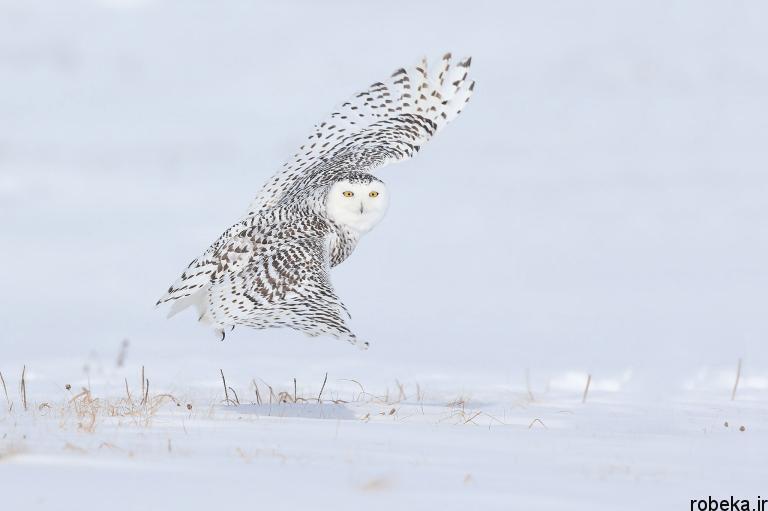 wildlife animal photos 26 29 عکس زیبا و دیدنی نشنال جئوگرافیک از حیات وحش حیوانات