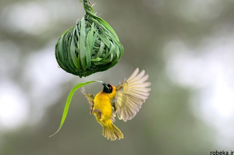 wildlife animal photos 27 29 عکس زیبا و دیدنی نشنال جئوگرافیک از حیات وحش حیوانات