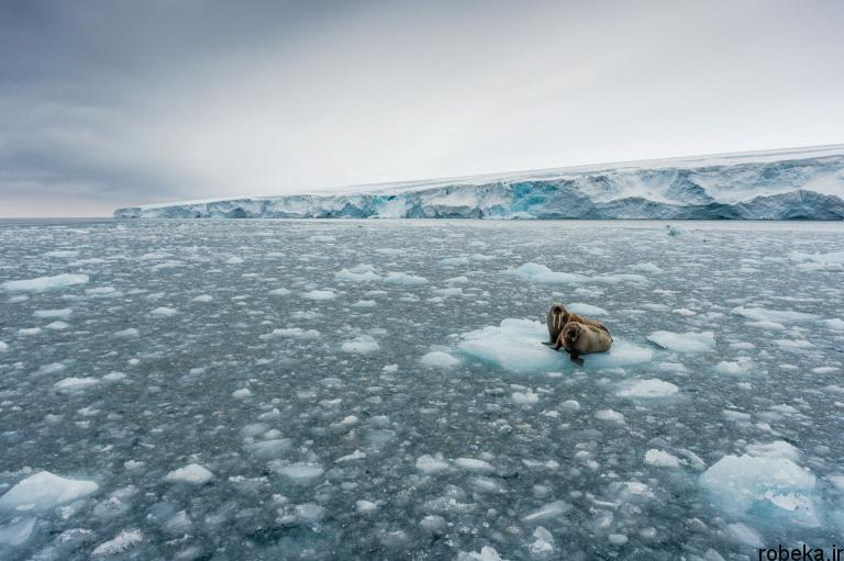 wildlife animal photos 3 29 عکس زیبا و دیدنی نشنال جئوگرافیک از حیات وحش حیوانات