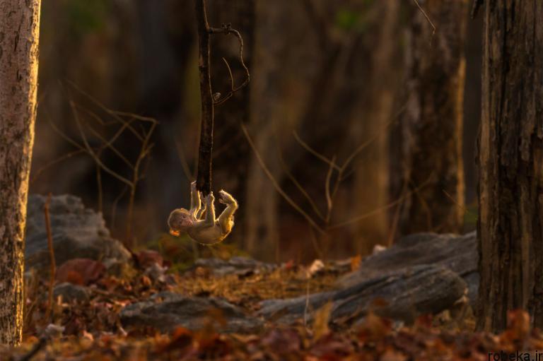 wildlife animal photos 4 29 عکس زیبا و دیدنی نشنال جئوگرافیک از حیات وحش حیوانات