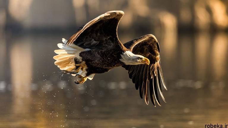 wildlife animal photos 5 29 عکس زیبا و دیدنی نشنال جئوگرافیک از حیات وحش حیوانات