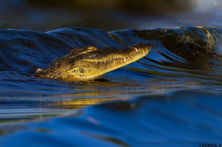 wildlife animal photos 7 29 عکس زیبا و دیدنی نشنال جئوگرافیک از حیات وحش حیوانات