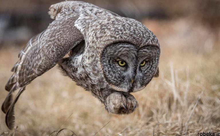 wildlife animal photos 9 29 عکس زیبا و دیدنی نشنال جئوگرافیک از حیات وحش حیوانات